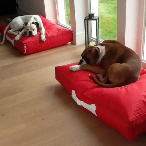 Doggielounge-grey-Stonewashed-Large-bydnd-fatboy-L.jpg
