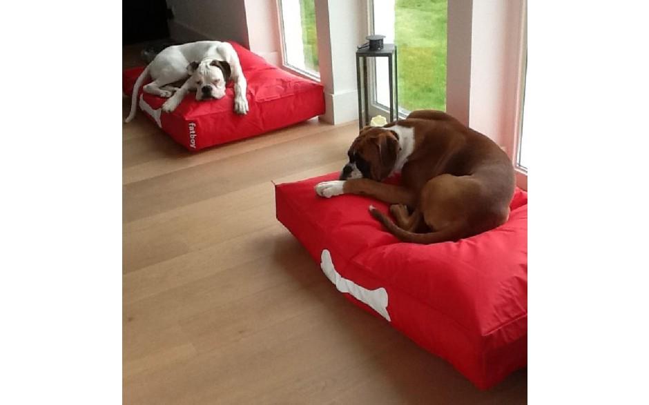doggielounge-demo-bydnd-fatboy-L.jpg